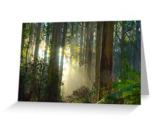 Sherbrooke Forest - Mt Dandenong Australia Greeting Card