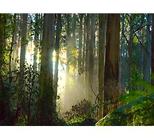 Sherbrooke Forest - Mt Dandenong Australia Photographic Print