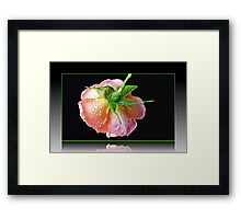 Orange Wildfire - Raindrops on Rose in Reflection Frame Framed Print