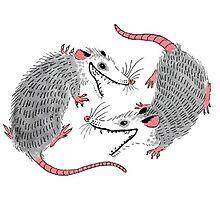 Double Possums Photographic Print