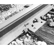 Lizard on the Rail Photographic Print