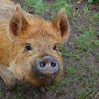 Smart Pig by Leigh Jones