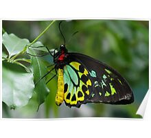 Melbourne Zoo - Butterfly House Poster