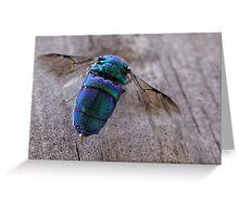 Cookoo Wasp Greeting Card