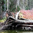 Fallen - Autumn Calling by tkrosevear
