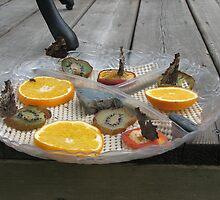 FEEDING TIME!!! by gypsykatz