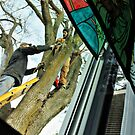 Up A Tree by Jane Neill-Hancock