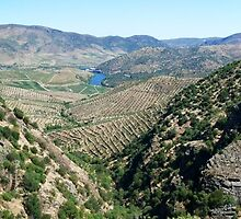 Douro River Valley, Portugal by Trish Meyer