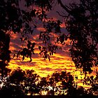 Eltham sunset by straylight