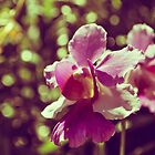 Orchids Memories by tropicalsamuelv