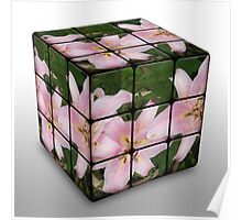 Pink Lily in Rubix Cube Poster