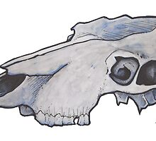 Bovine Skull   by richard b. hamer