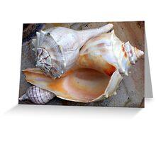 Full View Sea Shells Greeting Card