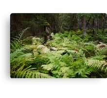 bed of ferns Canvas Print
