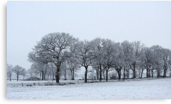 Trees in Winter by ienemien