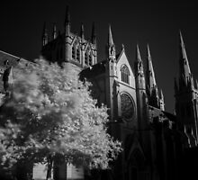 St Mary's Cathedral Sydney by KenL