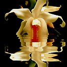 ORCHID REFLECTION by Johan  Nijenhuis