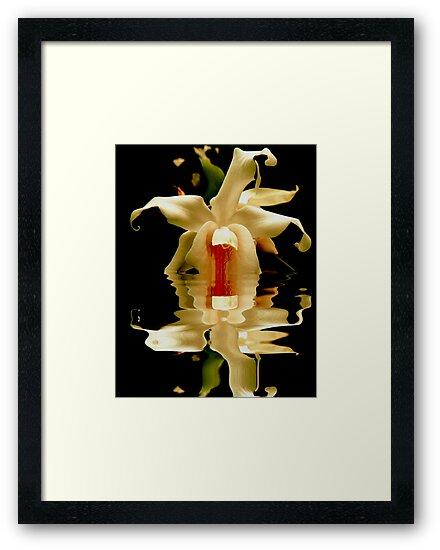 ORCHID REFLECTION by Johan  Nijenhuis