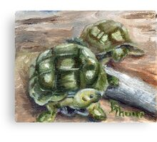 Turtle Friends Canvas Print