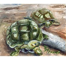 Turtle Friends Photographic Print