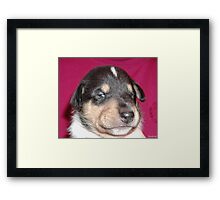 We are not Smug. We are Cute! Framed Print