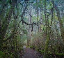 Enchanted Forest, Cradle Mountain, Tasmania by Elaine Teague