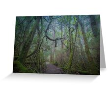 Enchanted Forest, Cradle Mountain, Tasmania Greeting Card