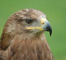 Russian Step Eagle by WhartonWizard