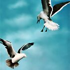 Two Seagulls Original oil painting  by Barry W  King