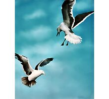 Two Seagulls Original oil painting  Photographic Print