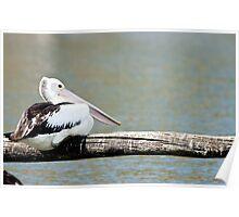 Balancing Pelican Poster