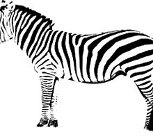 Black and ? zebra, you choose by Matty-Taylor