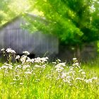 Wildflowers At the Barn by Kathy Weaver
