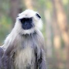 Pensive Langur by magiceye
