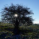 Winter sunset by heinrich