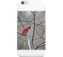 Common House Finch iPhone Case/Skin