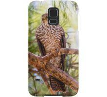 Collared Sparrow hawk Samsung Galaxy Case/Skin