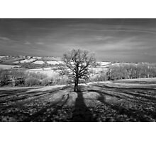 Lone tree over the East Somerset Railway Photographic Print