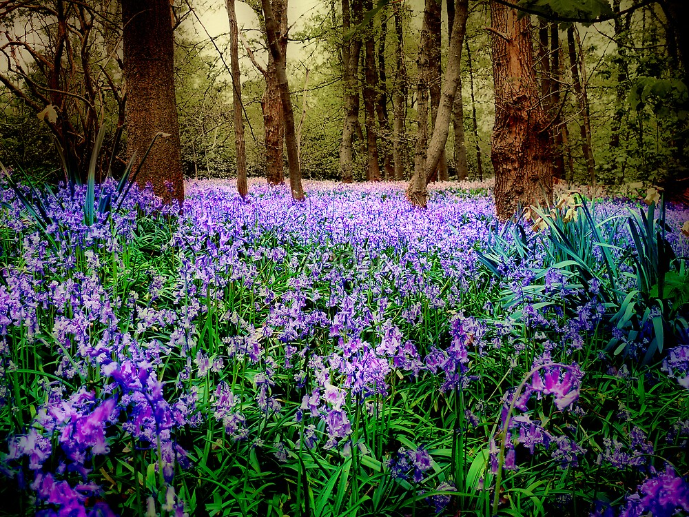 In And Out The Dusty Bluebells by A90Six