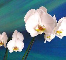 Orchids by terezadelpilar~ art & architecture