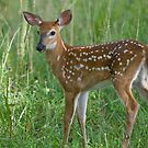 Small Fawn by BigRPhoto