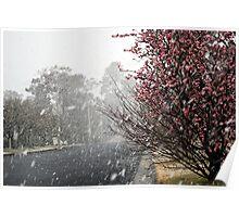 Leura Snow Poster