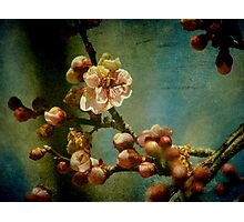 Hint of Spring Photographic Print