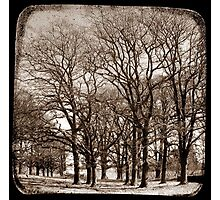 The Elms - Gostwyck, New South Wales, Australia Photographic Print