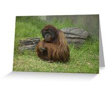 Orangutan - Adelaide Zoo Greeting Card