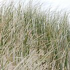 Dune Grass by sarahncraig