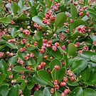 Pink and orange berries  by Rivendell7