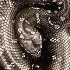 Diamond Python by AlldogsDesigns