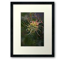 Natural Elements Framed Print