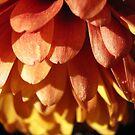 chrysanthemum II by Floralynne